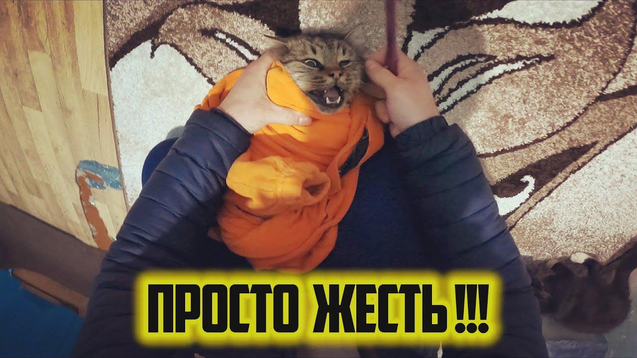 КОТ СОШОЛ СУМА !!! Кот Легенда не хочет глотать таблетку !!! Без комментариев. - скачать с YouTube бесплатно