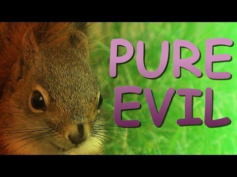 Animal Rescue – Squirrel Edition
