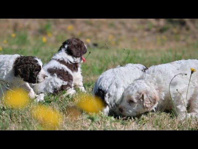 4 week old puppies venture outside.