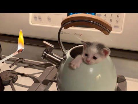 На пеньке сидел котёнок за 24 февраля