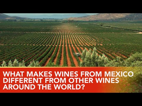 What are the Grape🍇 Varieties Of Mexico's Wine Country?  The Key🔑 to Mexico's Wine Future.