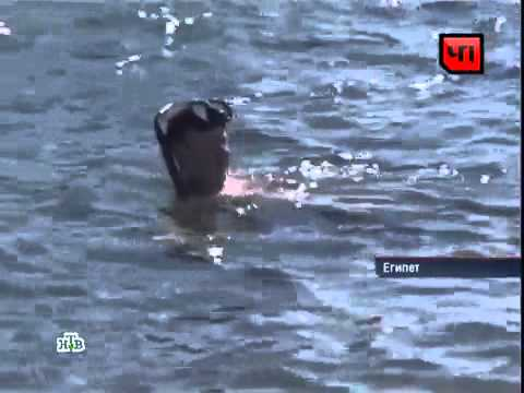 Сербский турист в Египте прыгнув воду убил акулу!