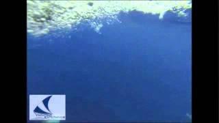 Delfini nuotano sotto la barca YACHTING EXPERIENCE