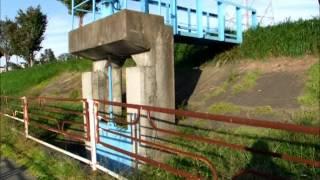 新井田大橋から上流~樋門・鴨・ウミネコ H23.9.29(木).wmv