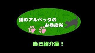 猫のアルベックの動画「猫のアルベックのお昼寝所【自己紹介編】」のサムネイル画像
