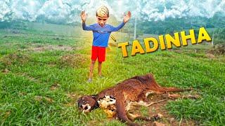 Download lagu Encontrei Uma Vaca Morta No Meio Do Pasto
