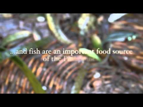 Philippines Seagrass Fisheries