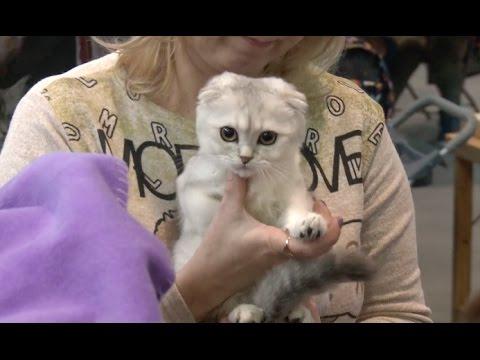 Int'l Cat Exhibition Held in St.Petersburg