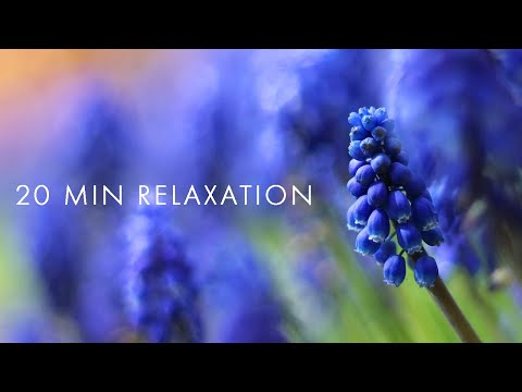 20 min RELAXATION HEALING Music: Anxiety and Stress Relief