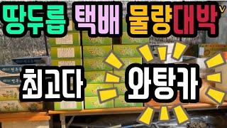 (귀농)땅두릅 택배물량 온라인판매 대박!!(감사합니다.…