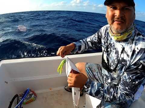 BABY CUDA AND TUNA ARUBA FISHING ON SMALL BOAT
