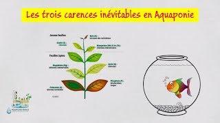 👩🎓 Les trois carences inévitables en aquaponie