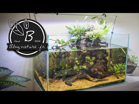 """un aquarium """"lowtech"""" ouvert, sans filtre, sans chauffage, sans"""