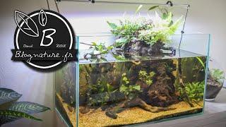 """Un aquarium """"lowtech"""" ouvert, sans filtre, sans chauffage, sans CO2..."""