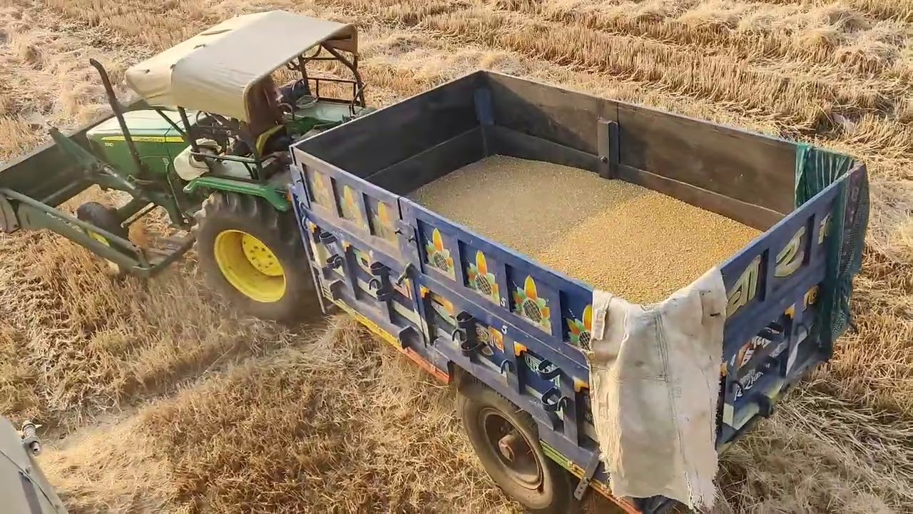 wheat harvesting start vishal harvester john Deere 5310 john Deere 5050 D tractor