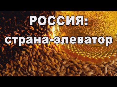 Русская экспансия: ячмень