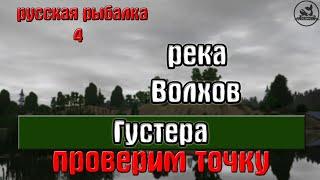 Російська рибалка 4(рр4) - річка Волхов. Густера. Перевіримо точку