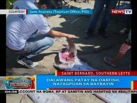 BP: Dalawang patay na oarfish, natagpuan sa baybayin