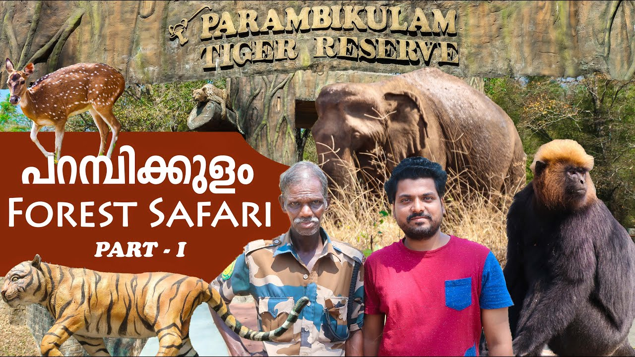 Jungle Safari | Parambikulam Tiger Reserve | Part - I | sherinz Vlog #47