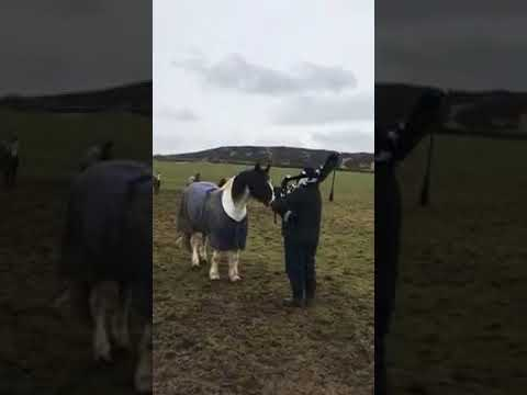 """Bagpipe Whisperer"" Calls Horses In From Pasture With Haunting Scottish Song"