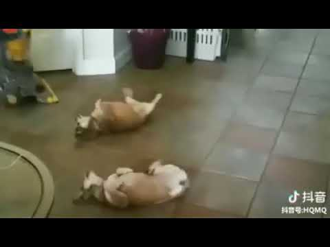 Dog Series: When a dog spreads its craziness to other