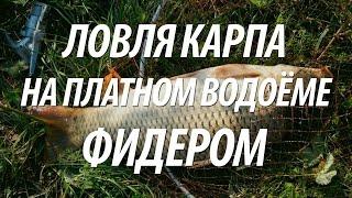 Фидерная платная рыбалка на карпа(Фидерная платная рыбалка с Нормундом Грабовскисом на карпа в Латвии. Как ловить карпа на фидер, какие приме..., 2016-07-30T06:00:00.000Z)