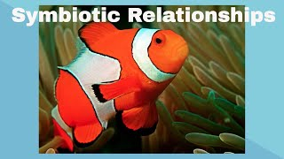 Examples of Symbiotic Relationships