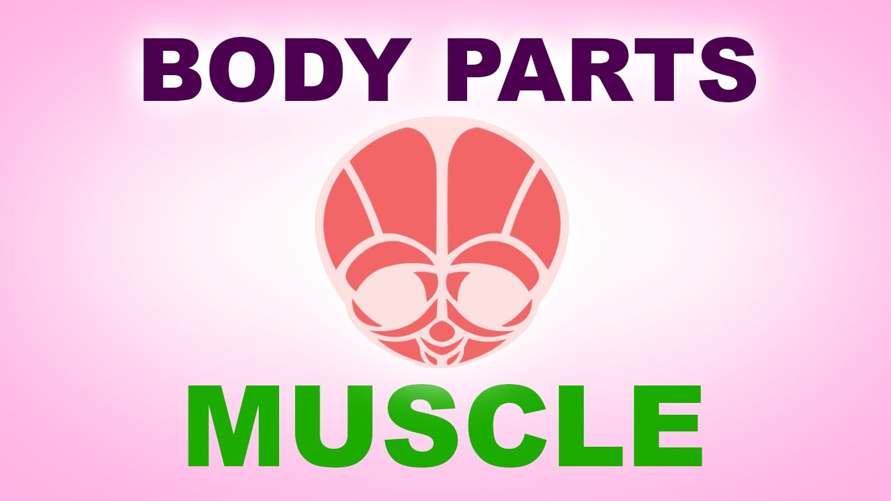 Muscle Human Body Parts Pre School Know Your Body Animated
