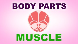 Muscle - Human Body Parts -  Pre School Know Your Body - Animated Videos For Kids