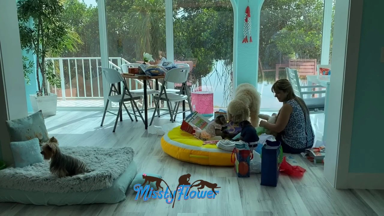 Monkey Angelika opens her bday gifts 🎁 with Toby, Russel the dogs & mama 🎁😍 & see 2 little birds