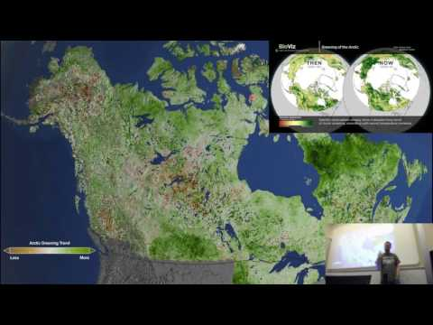 The carbon cycle: where does it all go?