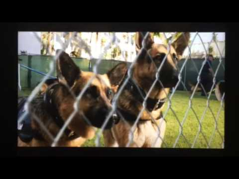 Beverly Hills chihuahua 2 Delgado sons