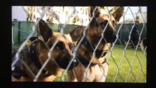 Beverly Hills chihuahua 2 Delgado sons scene