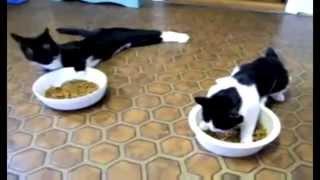 валерьянка и коты прикол
