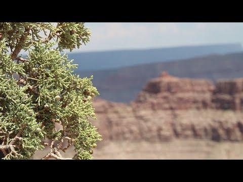 Arizona - Grand Canyon - USA Trip