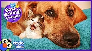 Tiniest Kitten and Her HUGE Dog Brother Do Everything Together | Animal Videos For Kids | Dodo Kids