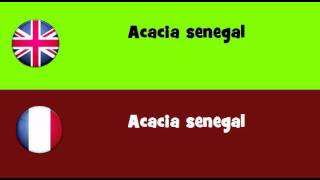 FROM ENGLISH TO FRENCH = Acacia senegal