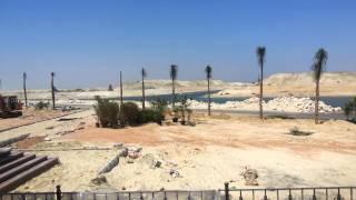 زراعة أشجار النخيل امام مسجد قناة السويس الجديدة