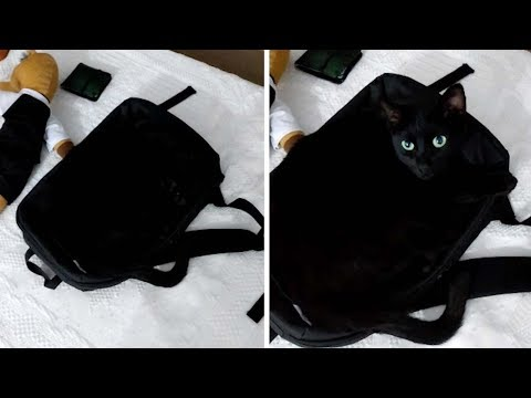 Black Cat Blends Perfectly Into Backpack