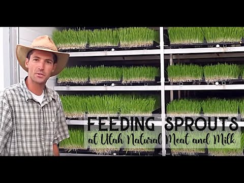 Feeding Sprouts