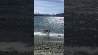 波にくじけるチェイス thumbnail