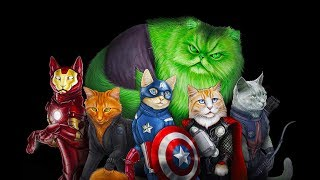 КОТЫ-СУПЕРГЕРОИ! А кто из Мстителей твой кот?