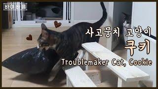 사고뭉치 고양이 ,쿠키  고양이 비닐사랑 | 바이바름…