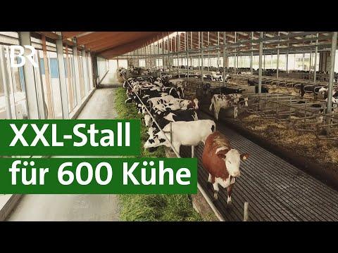XXL-Kuhstall in Franken - Tierwohlstall oder Massentierhaltung?   Unser Land   BR Fernsehen
