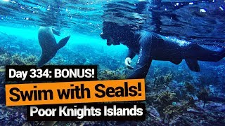 Video blog - Snorkelling with Seals in Whangarei - Day 334, Part 2