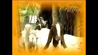 Pon Vilaiyum Bhoomi  22/03/2016