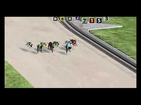 Virtual Greyhound Racing - Palm Beach Virtual Race Preview