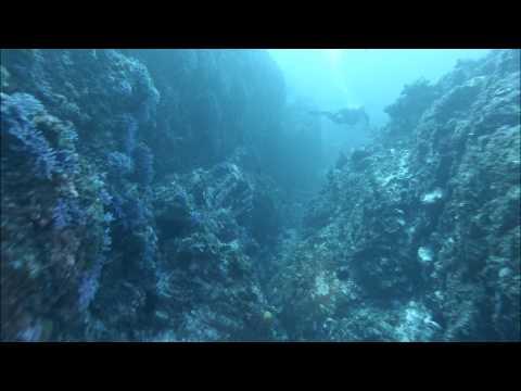 Diving Santa Barbara Island and Farnsworth