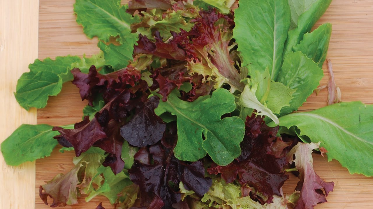 How To Plant Grow Lettuce Youtube