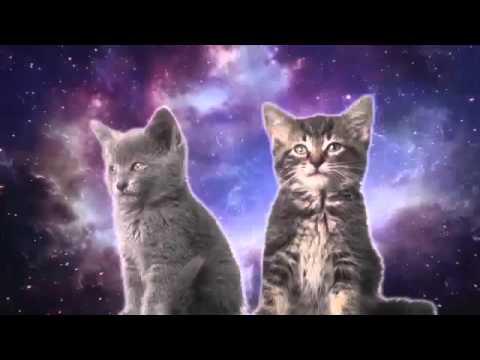 Магия котята в космосе